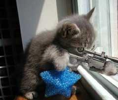 חתולים משמשים כפיתיון כדי להחזיר את התיירים לבריסל
